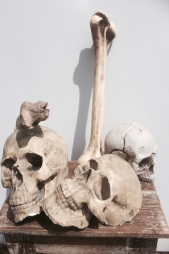 Schädel Knochen Verleih Dekoverleih Halloween Grusel Hamburg